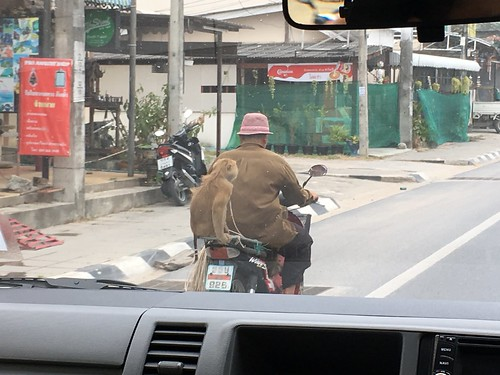 Koh Samui Mokey riding
