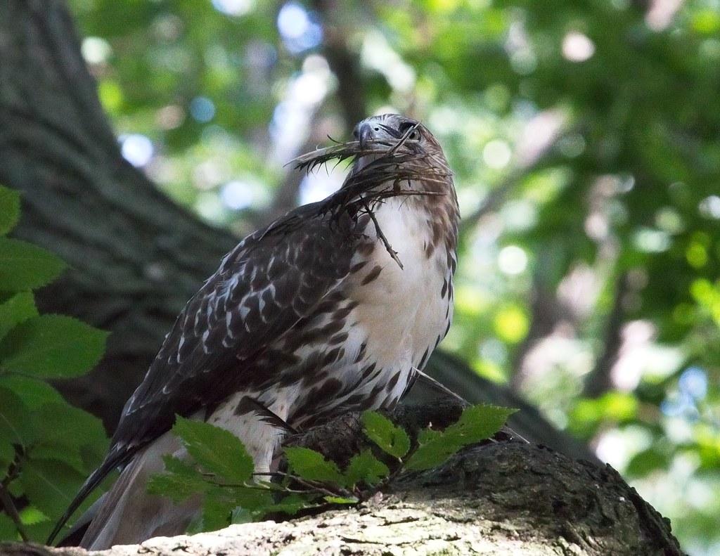 Beak full o' feathers