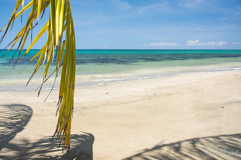 Tropical, paradise, Manzanillo, beach, Costa, Rica, Kaido Rummel