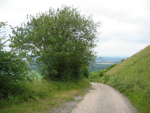 31 path