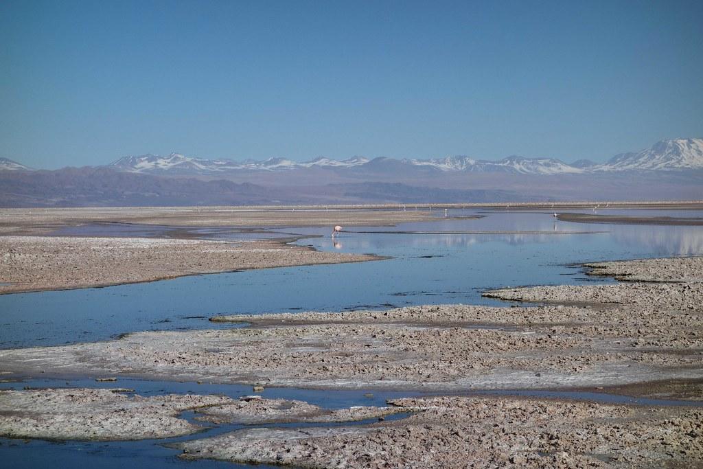 San Pedro Atacama - Piedras Rojas - Laguna Chaxa - Flamingo 4