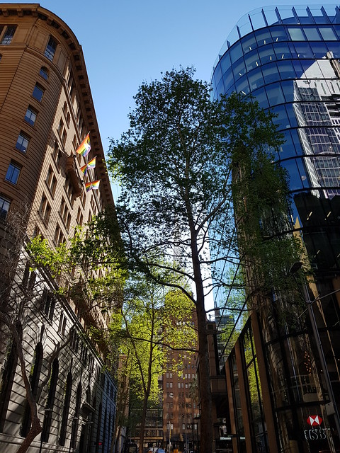 Sydney CBD Old and new Architecture plus Trees - Samsung Galaxy Note 8 photo example.jpg (1)