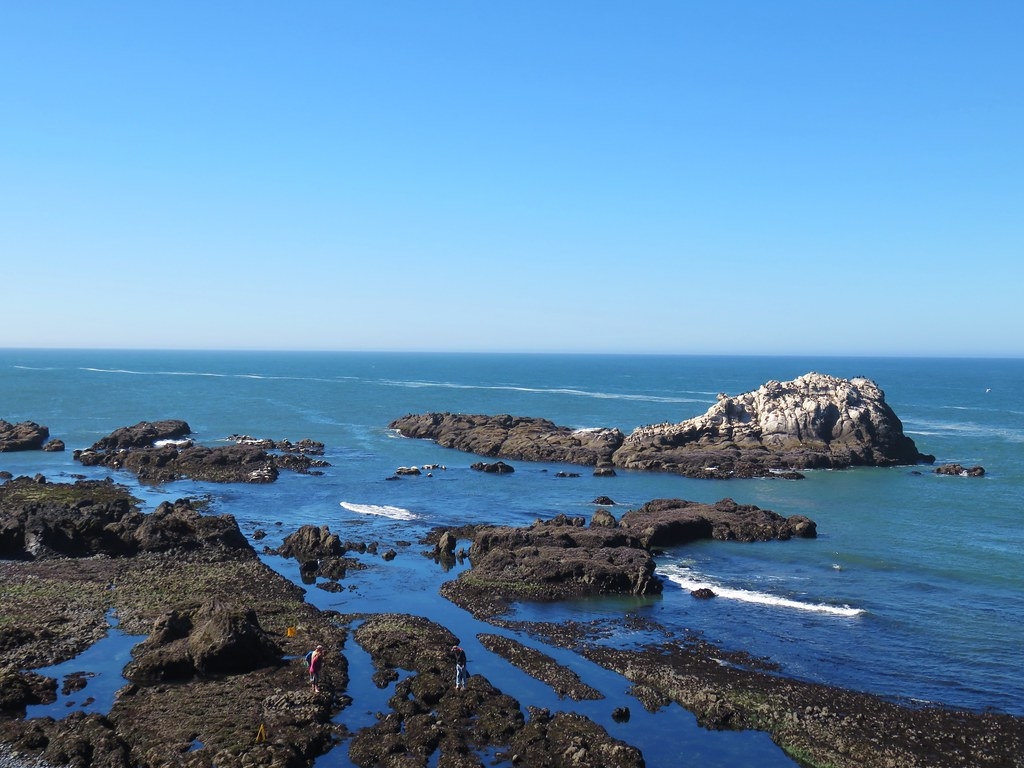 Tide pools at Yaquina Head