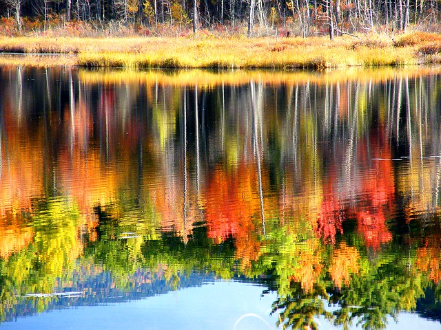 N.H. Fall Reflection