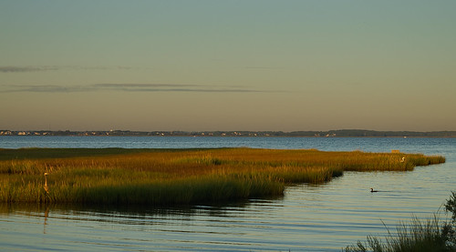 assawomanbay oceancity maryland sunrise marsh blueheron cormorant greategret