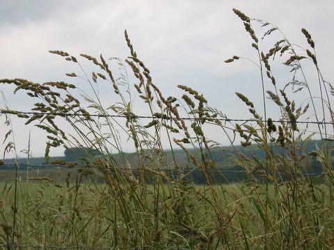 09 tallgrass