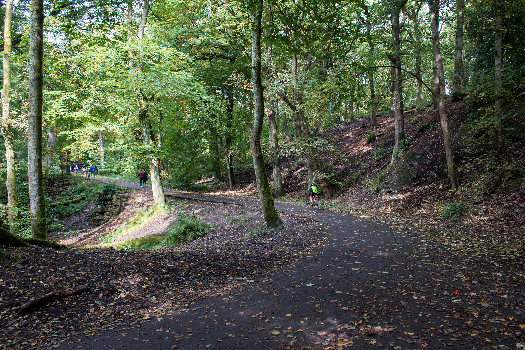 Woodland Walk to Haigh Hall | Up The Hill