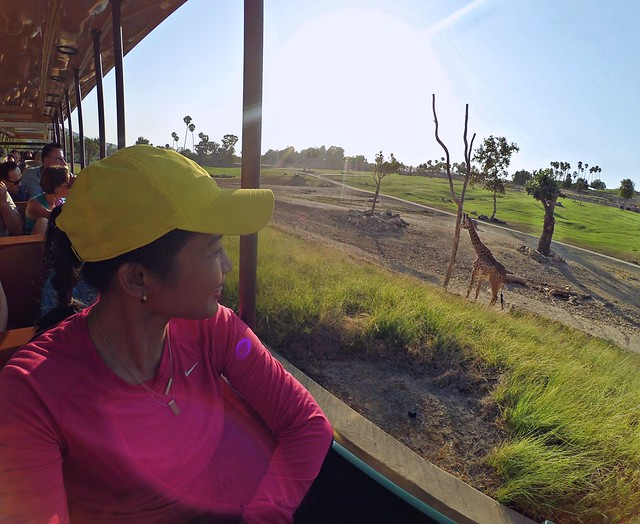 how to visit san diego safari park crystal neri