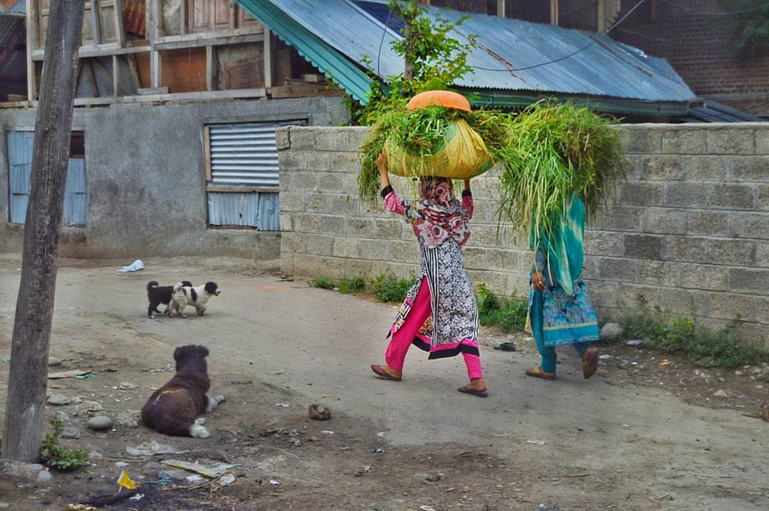 Village girls return to their houses with carry fodder for there cattles on their head in Pulwama,South Kashmir somehow 60 km away from the summer cap </td> </tr> </table> </div> </section> <!-- --> </div> <h2 class=