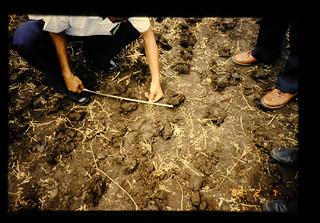 Row Width Measurement In Non-tillage Soybean Planting Field = 不耕起大豆は種の条間測定