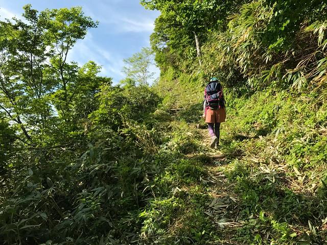 鷲ヶ岳 桑ヶ谷ルート 登山道