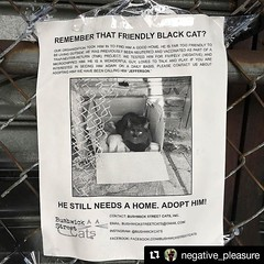 Every day that passes without Jefferson in your home is day you might later regret having missed! Adopt him! #Repost @negative_pleasure (@get_repost) ・・・ I love this cat and if I could afford to adopt him from @northbrooklyncats I would but I can't so you