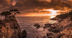 Lone Cypress Panorama, Another perspective.