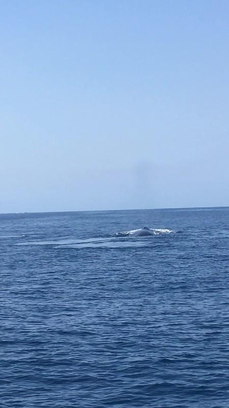 Whales ahoy!