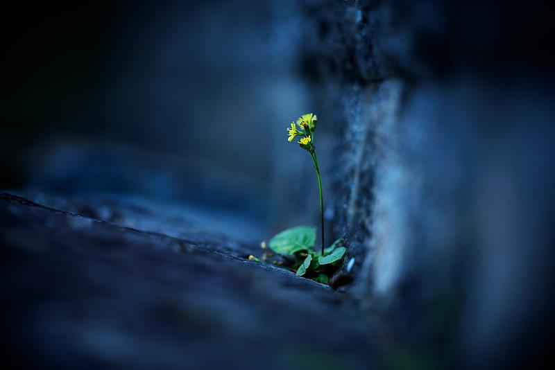 a tiny life