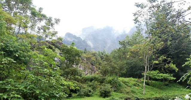 溪頭的山嵐 (2)