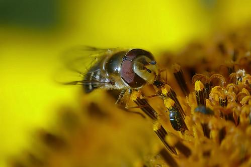Pollen Lover