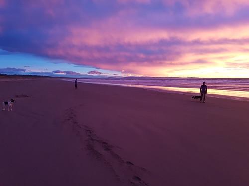 Predawn Pines Beach, Kaiapoi