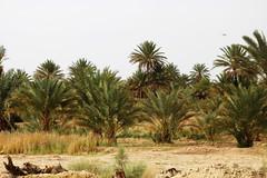 Morocco: Rissani