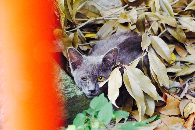 Today's Cat@2017-09-03
