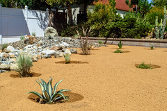 DLS Best Low Water Landscaping Desert Drought Tolerant Resistant Service in Rancho Cucamonga,Upland,Claremont Californina CA