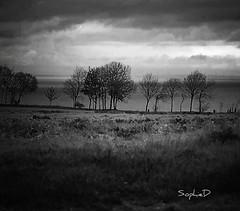 nature - Photo of Avoine