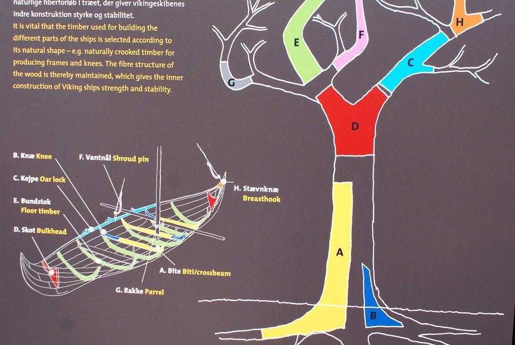 La construction des bateaux reprend des parties de l'arbre présentant une forme adéquate.