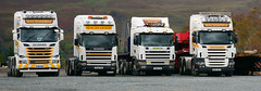What is a Group of SCANIA's??