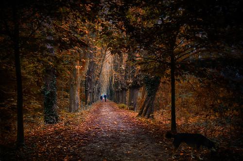 walk in Autumn