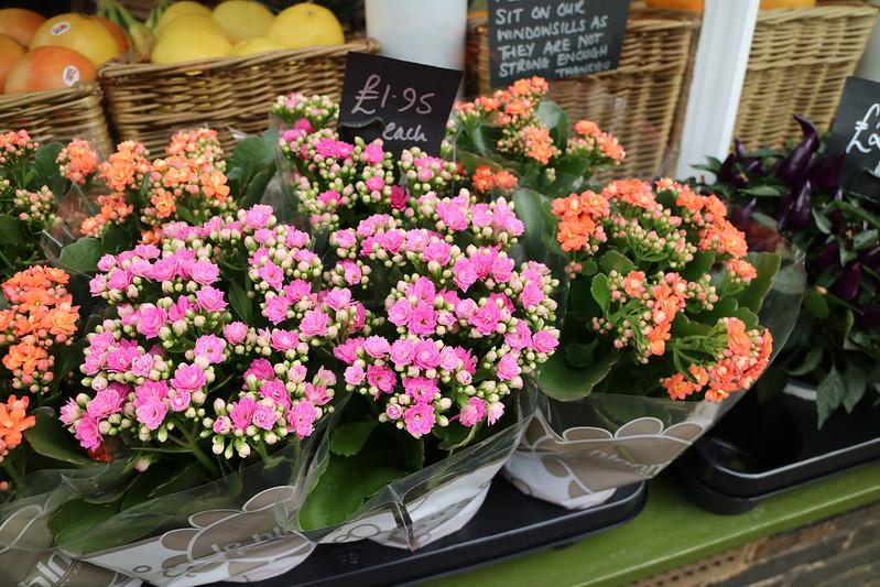 Flowers - Southwold - Shop