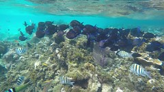 Following the Gang!...................................................And my dear friend The Parrot Fish!!!
