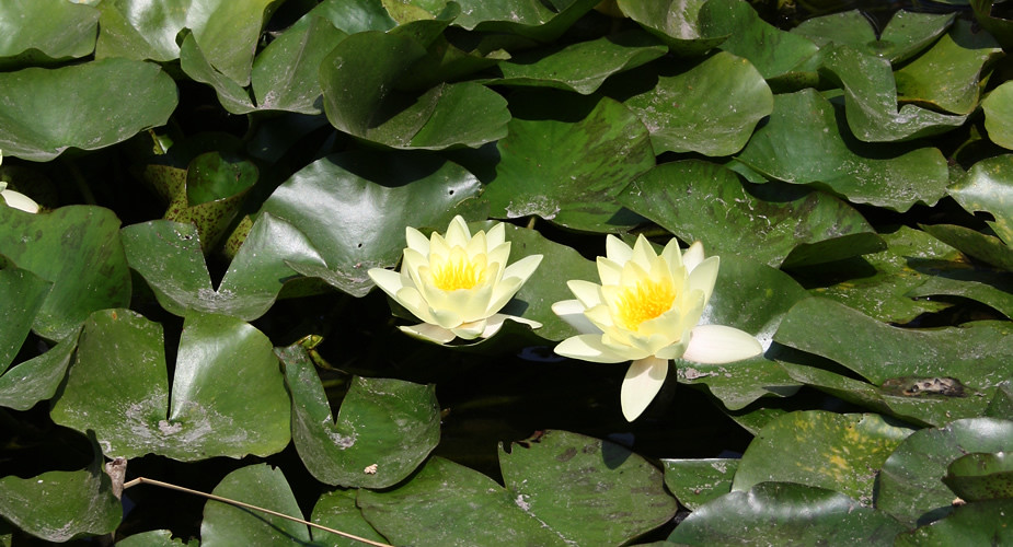 Margit Eiland Boedapest, Japanse tuin | Mooistestedentrips.nl