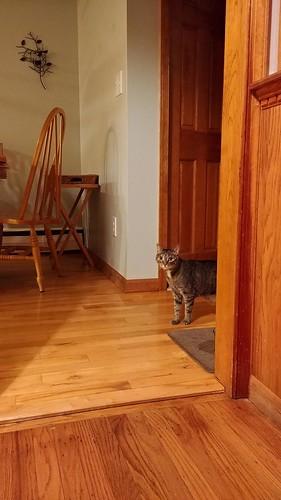 Brave cat explorer