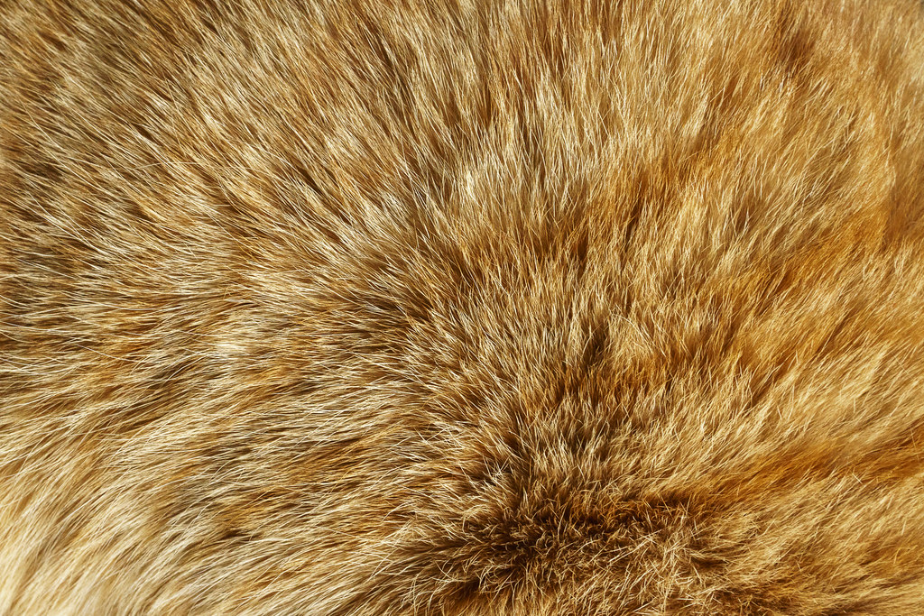 A close-up view of the striped fur pattern of an orange tabby
