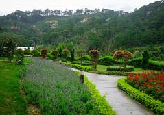 Flower garden at the public park