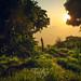 Eden Garden by tristan29photography
