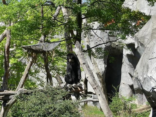 Brillenbär, Zoo Frankfurt
