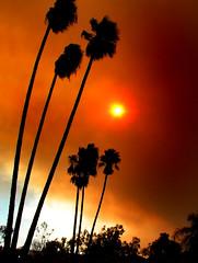 Smokey SunStar