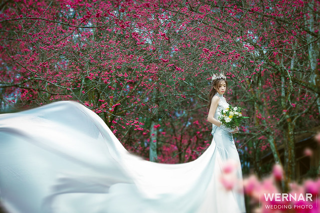 桃園婚紗,台中婚紗,婚紗照,婚紗攝影,拍婚紗,自主婚紗,一站式婚紗,拍婚紗,結婚照,婚紗推薦,花海婚紗,婚紗外拍景點, 櫻花婚紗照