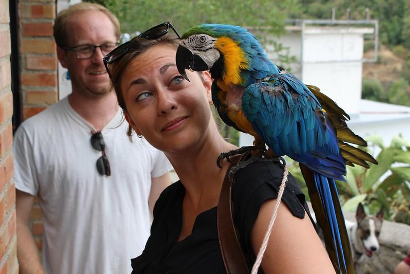 Granada parrot