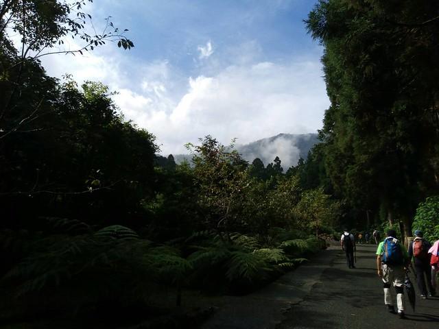 溪頭的山嵐 (12)