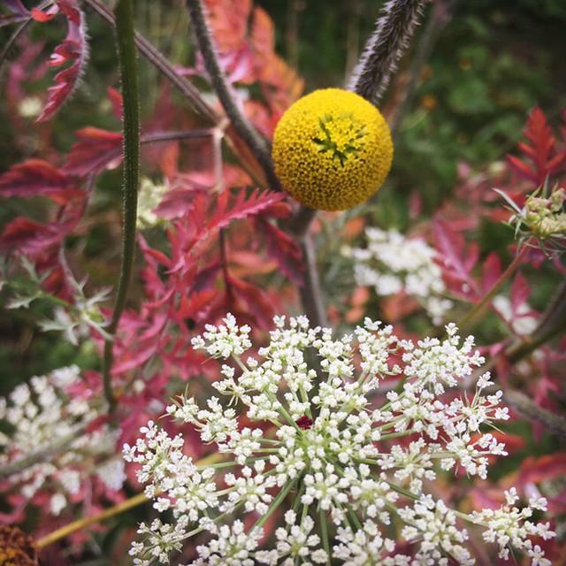 August break: pretty weeds