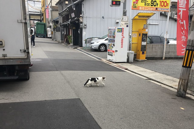 Today's Cat@2017-09-05