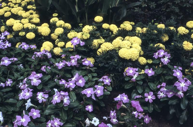 Summer Flower Setting_