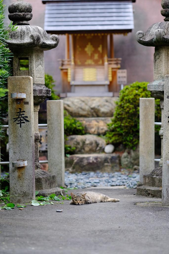 cat - inuyama, aichi-pref