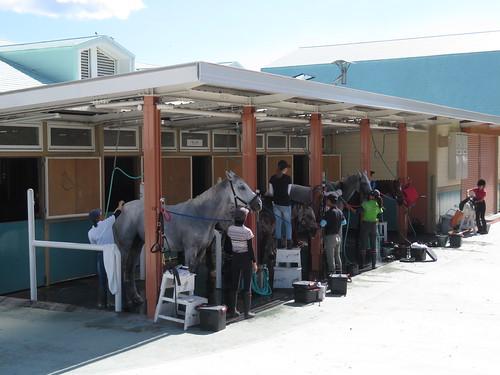 小倉競馬場の乗馬センターの馬房