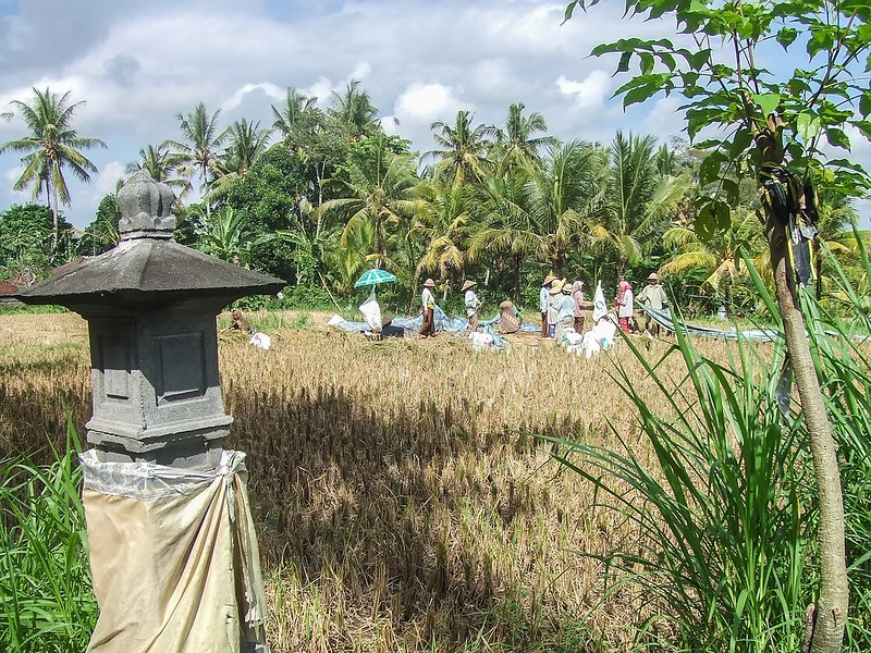 Scène rurale, Bali 36995052625_e88a90ab19_c