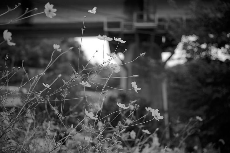 高架下を翔ぶ蝶