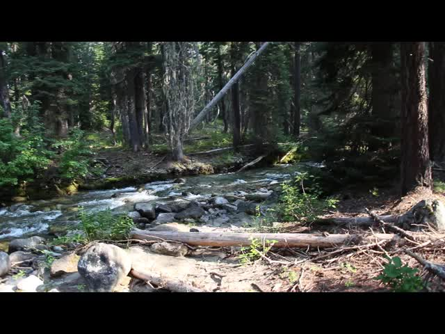 0382 Video of the bridge over Phelps Creek on the Buck Creek Trail near the Trinity Trailhead