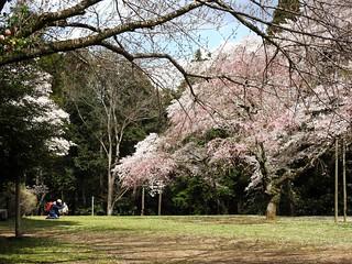 泉自然公園 31 人気者